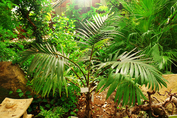 Palm in the botanical garden