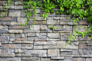 brick wall with green creeper plants