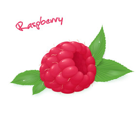 vector illustration of realistic isolated ripe raspberry with leaves