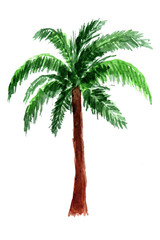 Palm tree in watercolor