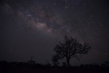 Silhouette of lonely tree with milky way