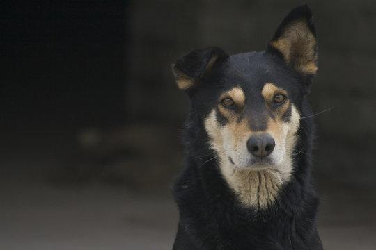 Черная дворняжка собака на темном фоне