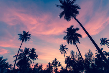 Silhouettes of palm trees against the twilight sky.
