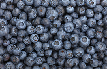 Background of fresh blueberry