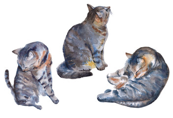 cat illustration on a white background. watercolor illustration.