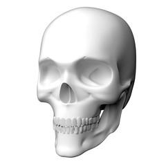 真っ白な人間の頭蓋骨の3Dレンダリング画像