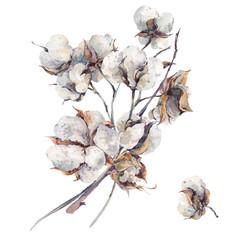 Watercolor vintage bouquet of cotton flowers