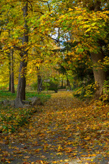 Fall park path