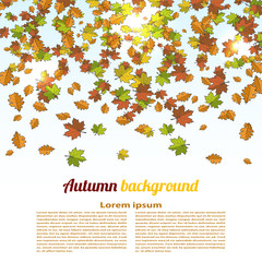 Autumn background with colored maple leaves. changing seasons il