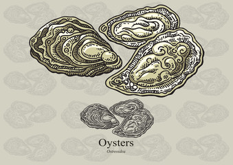 Oysters. Vector illustration for web, education examples, graphic and packaging design. Suitable for patterns and artwork in small sizes.
