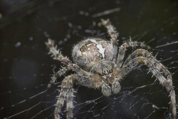 Close up spider macro