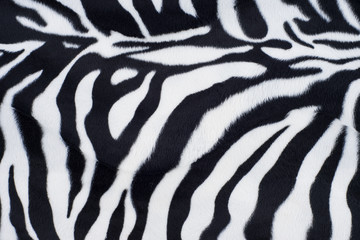 Zebra texture with beige white and black
