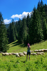 Woman taking picture of sheep in mountain valley.
