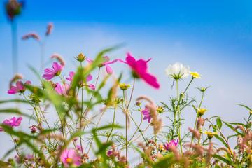 Blumenfeld - Colorful flower field