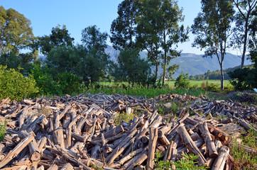 eucalyptus wood chops