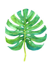 Tropical leaf illustration