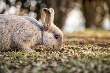 Ritratto di un coniglio selvatico in un campo di erba verde