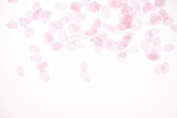 Fotobehang Kersenbloesem 桜の花びら