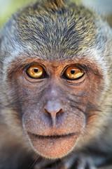 Portrait of curious monkey