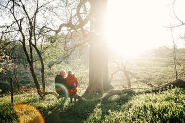 Rear view of loving couple sitting on fallen tree in forest on sunny day
