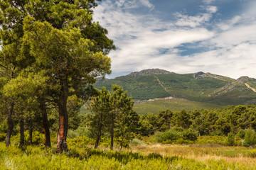 Pinar de Tabuyo del Monte y Montes de León.