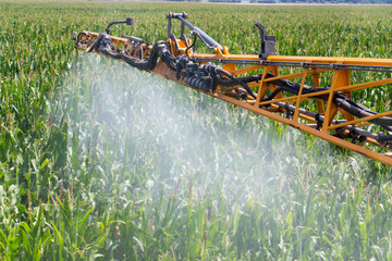Corn Spraying