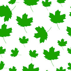 Autumn Set of green Maple Leaves on White Background, Vector Version