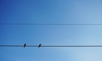 The birds resting on the cable wire in clear blue sky background.