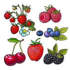 Collection of forest berries, vector illustration isolated on white background. Strawberry blueberry blackberry cherry raspberry. Set of fresh ripe berries, smoothie ingredients