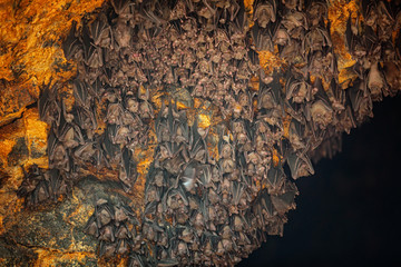 Colony of Bats at Goa Lawah Bat Cave Temple in Bali