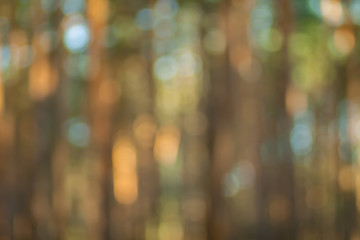 Blurry nature wallpaper. Pine forest bokeh background. Green defocused backdrop for your design.