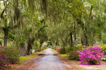 USA, Georgia, Savanah, Tree lined bath way in the Bonaventure Cemetery