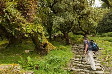 Backpacker trekking to Ghorepani village in Annapurna area, Nepa