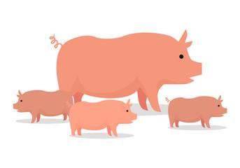 Pigs Flat Design Vector Illustration. On White.