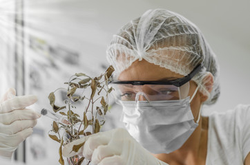 ecologist injected vitamins and revives plant