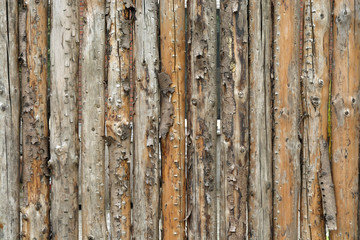 brown background with a row of wooden tree trunk poles with empty copy space