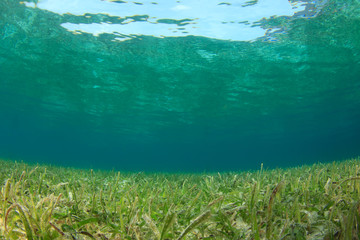 Underwater ocean background, seagrass and sunlight