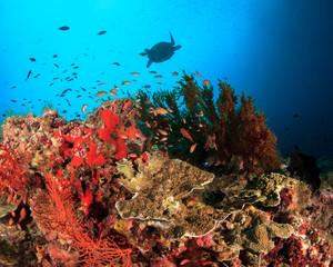 Coral reef underwater, turtle swims overhead