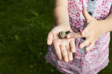 Snails in child's hands.