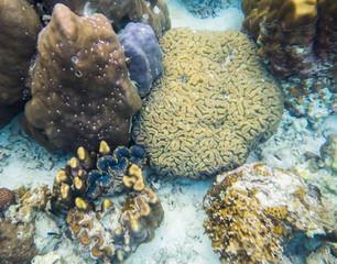 Big coral brain with big clam in lipe sea