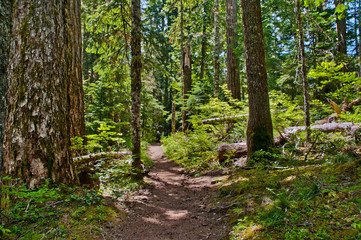Sunlit forest trail to Packwood Lake in Washington.