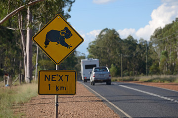 koalas cross here