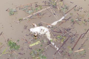 frog dead