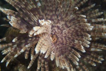 Unterwasser - Riff - Röhrenwurm - Wurm - Tauchen - Curacao - Karibik