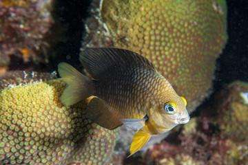 Unterwasser - Riff - Fisch - Koralle - Tauchen - Curacao - Karibik