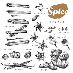 Flavour spices sketch food design big set for bakery shop. Vector isolated elements: cinnamon,