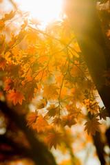 autumn trees blur background
