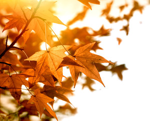 Beautiful autumn foliage in late afternoon