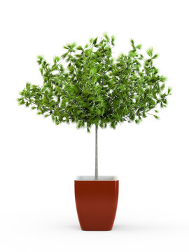 Big green tree potted plant isolated on white background. 3D Rendering, 3D Illustration.