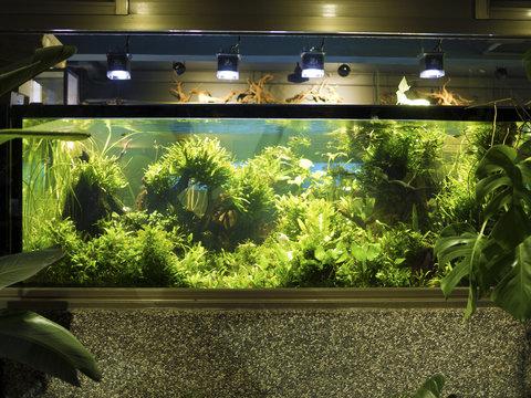 Aquascaping of the planted tropical freshwater aquarium